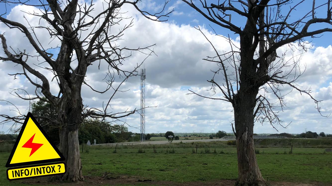 Deux châtaigniers morts à la suite de l'installation d'une antenne.