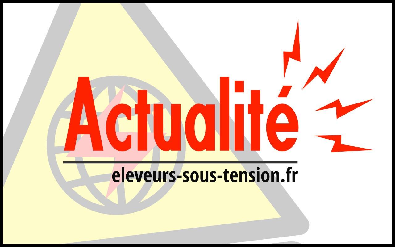 [RAPPORT MINISTERIELLE] : État des élevages à proximité du parc éolien des Quatre Seigneurs en Loire Atlantique